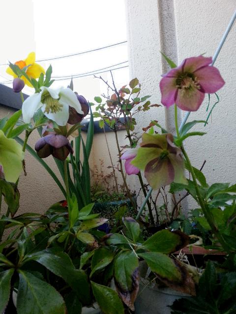 花々を楽しみそして石鹸でも