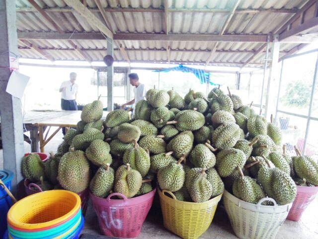 タイ東部の旅日記二日目ドリアンチップの工場