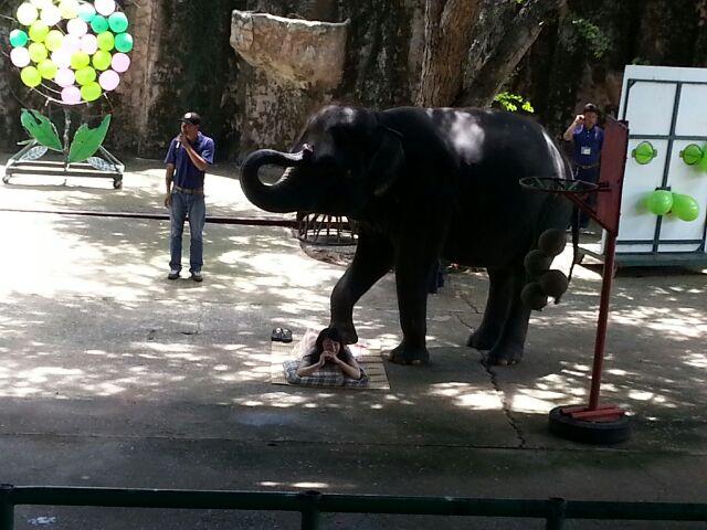 シラチャータイガーズ豚さん象さん