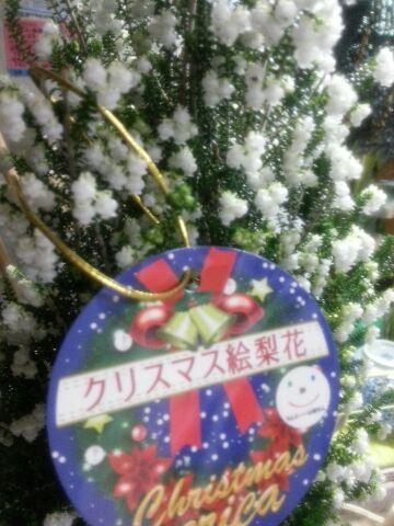 クリスマス絵梨花
